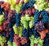 Georgians to develop grape for Mars
